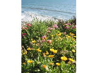 Spring flowers by the sea.