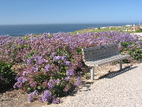 Park bench and purple flowers by the sea- come at sunset when the sun isn't so burny.