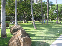 The wonderful palms and boulders on the seaside lawn at the Hale Koa Hotel.
