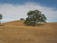 The Paso Robles hills surround you and make you feel at peace.