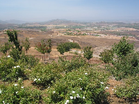 Views of avocado farms and barren land. On a clear day you can see a sliver of ocean.
