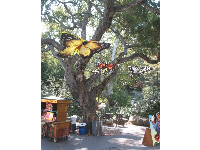Huge butterfly decorations hanging from the oak trees.