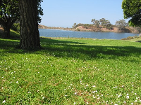 Sitting amongst the daisies at the lagoon.