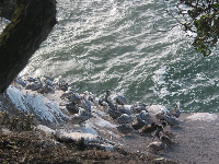 Pelicans hanging out on the rocks below.