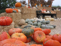 What a beautiful sight! Pumpkins and squash of all types.