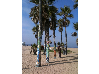 Palm trees decorated with graffiti at Venice Beach.