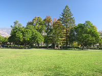 Lawn and Australian pine tree.