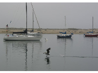 Morro Bay is a preserve for birds of many species.