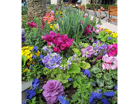 Flowerbeds in Easter colors.