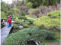 Father and son look at the koi in the Japanese Garden's pond.