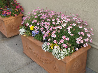 Flower box on Cannery Row.