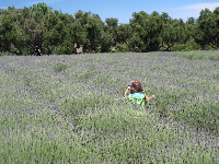 Swimming in the lavendar.