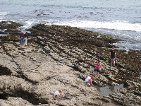 Families enjoy the tide pools at the bottom of the beach stairs.