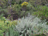 Colorful vegetation by the creek.
