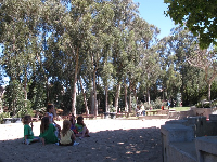 Kids in the sandpit with the lovely strand of eucalyptus behind.