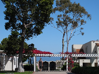 A student walking under the bougainvillea near the Administration Building.