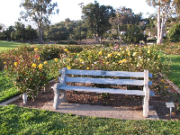 Bench and yellow roses.