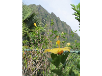 View of Ko'olau Mountains and hibiscus flower, at Luluku Road.