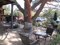 Chairs and tables under the huge tree outside Corner House Coffee.