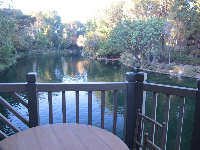 Serenity at Hungry Bear restaurant in Critter Country.