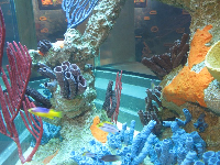 Coral reef and fish exhibit in the nature center.