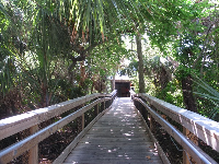 Pathway- so tropical!