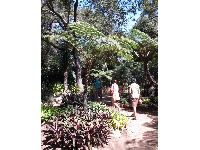 The tour group walks along by fern trees.