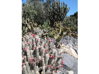 I was lucky the cactus garden was abundantly in bloom when I was there!