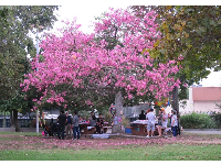 Party under a flowering tree.