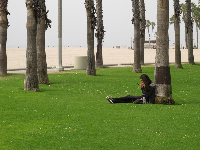 Taking a break leaning on a palm tree beside the beach, between Venice Beach and Santa Monica Pier.