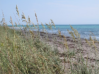 Sea oats and pretty water.