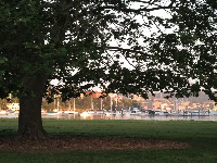 Large tree with boats behind.