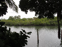 View of mangrove island.