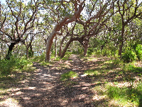 The trail and twisty trees.