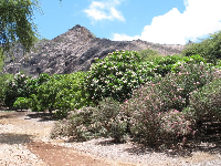 Koko Crater juts up in front of you.