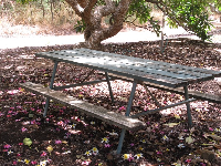 Picnic table on a carpet of flowers.