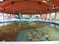 Nature centers are always so beautiful in Florida- look at this wooden structure!