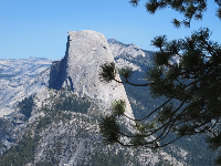 Half Dome and pine branch, from Washburn Point.