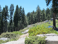 Pretty scenery near Glacier Point lookout.
