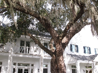 The lovely white house and tree with Spanish moss.