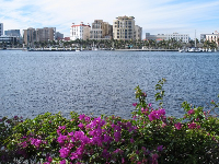 Bougainvillea and the lovely buildings of West Palm Beach.
