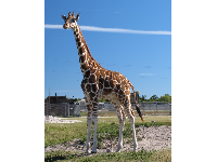 We were amazed to be right next to this tall Giraffe!
