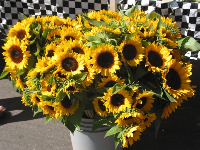 During summertime you can get wonderful sunflowers at the Farmers Market.