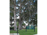 Spanish moss draped on trees at Gaston Edwards Park.