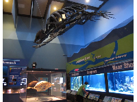 A model of a giant Achelon fossil hangs from the ceiling.