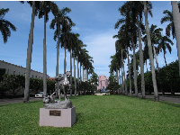 Row of palms between the Society of the Four Arts and the trail.