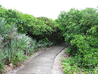 An opening in the vegetation at the parking lot leads to the Juno Dunes Natural Area.