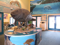 Inside the Manatee Observation Center.