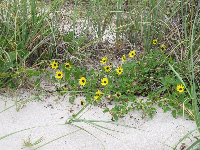 Wildflowers growing on the dunes.