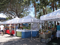 Stalls under tall trees at the Stuart Farmer's Market (Green Market).